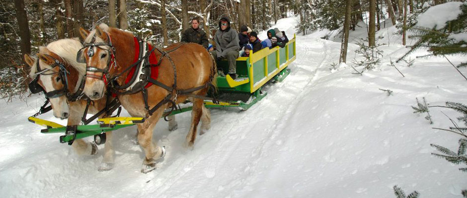 Horse-drawn sleigh at Adams Family Farm